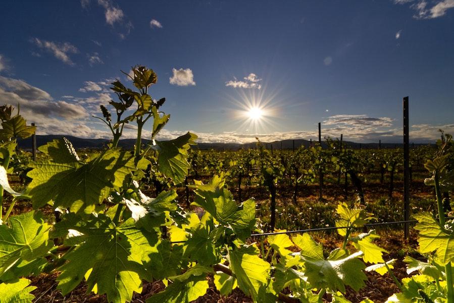 corso degustazione vini